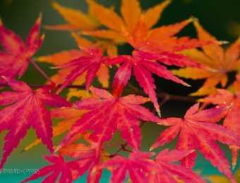Naturfotografie im Herbst